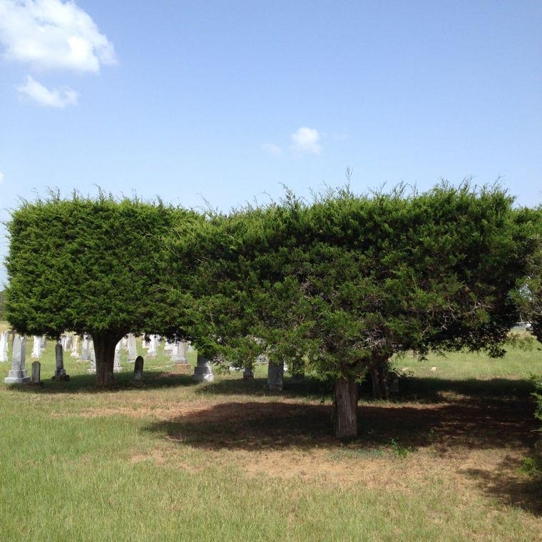 Serbin Cemetary Trees