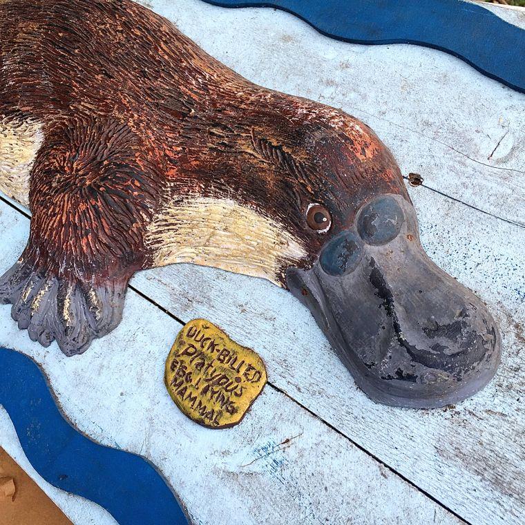 Jersey P Platypus