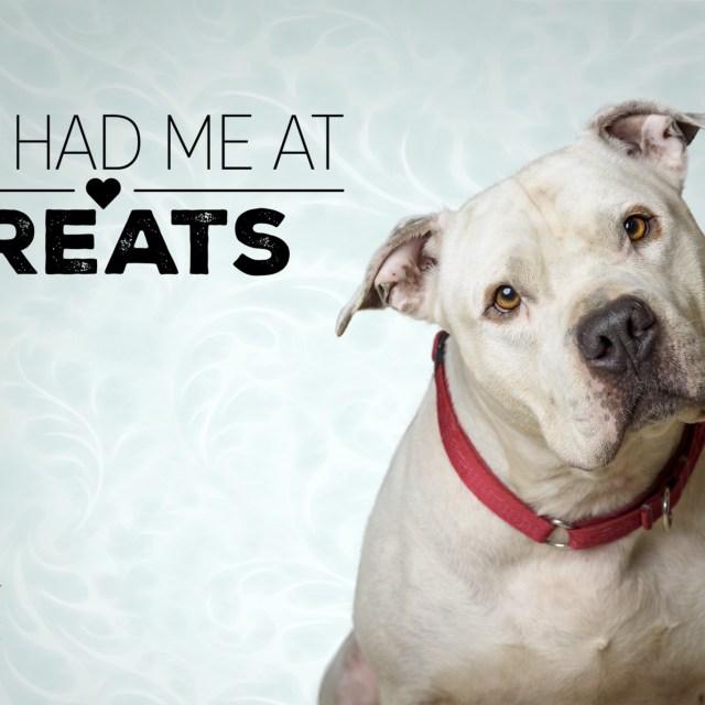 Pet Portrait of Casper, a male dog up for adoption