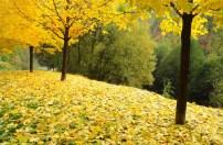 Outono em Sarajevo