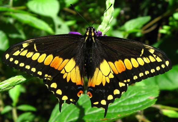 Manuel Antonio Vacation Rentals: Butterfly garden
