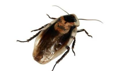 7 Ways to Prevent German Roach Infestations At School
