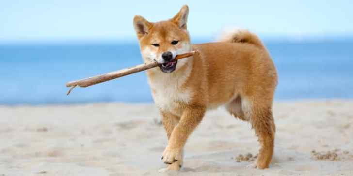 dogecoin news today