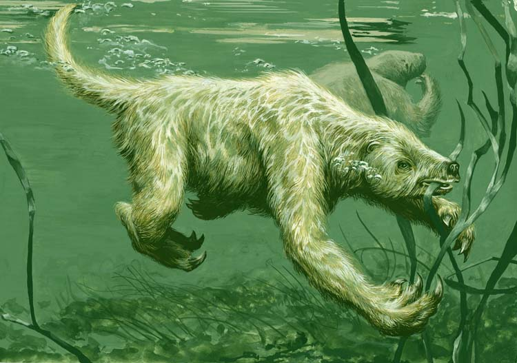 aquatic sloth