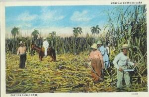 sugarcane_cuba