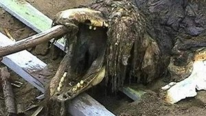 Carcasse échouée en Russie en 2006