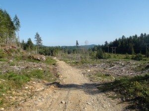 La mise à blanc près du Campground