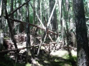 Structure attribuée au Bigfoot