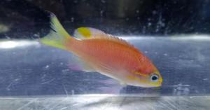 obama fish