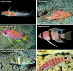 Une zone inconnue des océans grouillant de nouvelles espèces vient d'être découverte - Internet Explorer