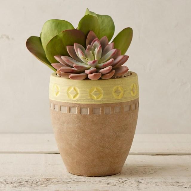 Succulent plants, terrarium