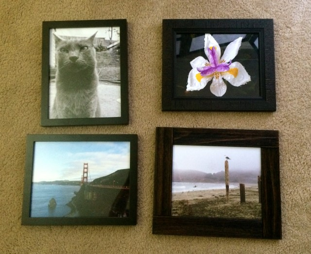 Top Left: Shady at Attention by Mark Bray - Top Right: Lily in the Morning by Darcy Rowley - Bottom Left: Into the City by Mark Bray - Bottom Right: Seagull and Surf by Darcy Rowley