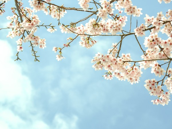 new beginnings this spring at Crystal Hills Organics