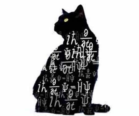 schrodinger s cat crystalinks