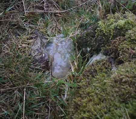 Angel Hair Angel Grass Star Jelly