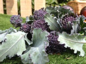 Wild Country: Purple sprouting broccoli