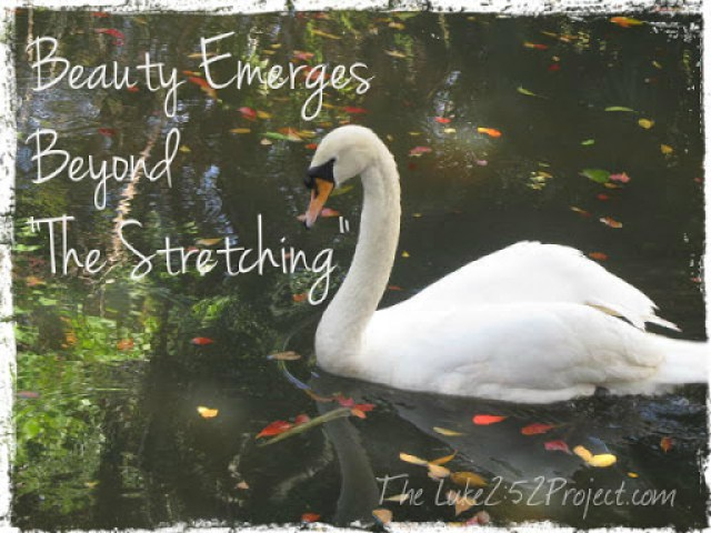 Beauty Emerges Beyond the Stretching