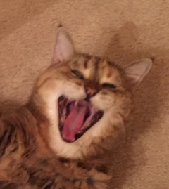 Speckles the Cat looks like she's laughing