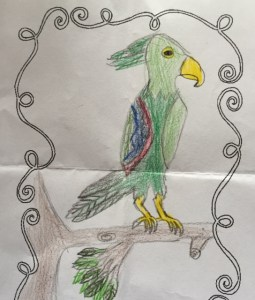 The boy who is an artist draws a parrot.