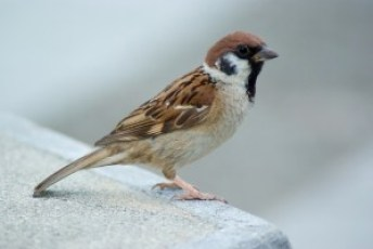 Photo of sparrow courtesy of images.all-free-download.com