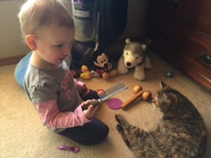 Little girl brushes cat.
