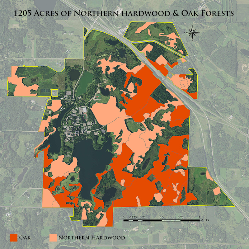 Map of montpelier in biophysical regions context. Hardwood Oak Forests Csb Sju
