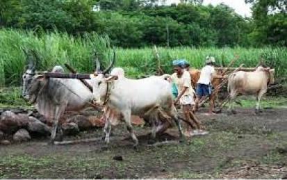 Kisan Registration Started :)) Gehu Kharid Kisan Panjikaran गेहूं खरीद हेतु किसान रजिस्ट्रेशन कैसे करना है
