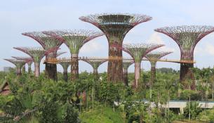 Supertree Grove_Singapore_640x320