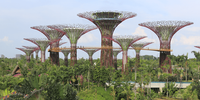 Supertree Grove Singapore 640x320 - Diversity in Singapore