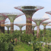Supertree Grove_Singapore_640x320