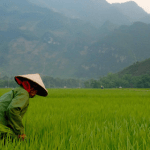Vietnam Farmer Rice 640x320 - On Food and Society in Viet Nam