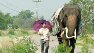 Man with umbrella walks beside elephant