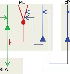 chandelier cell circuit diagram [ 1100 x 961 Pixel ]