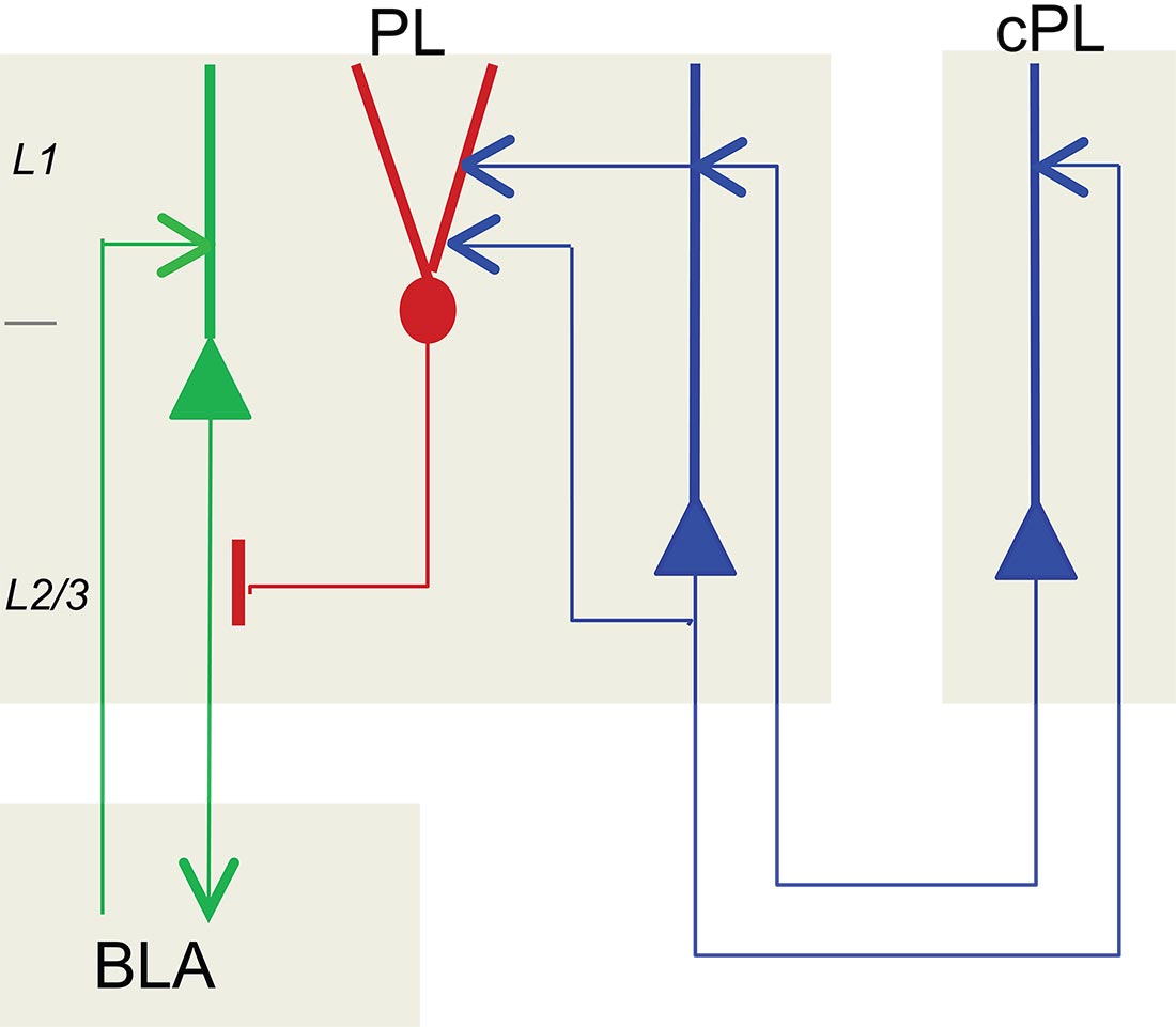 hight resolution of chandelier cell circuit diagram