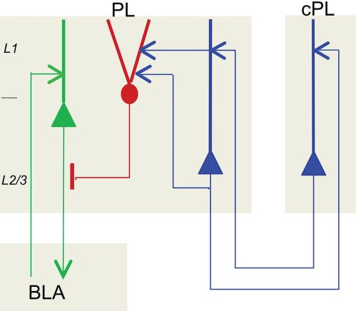small resolution of chandelier cell circuit diagram