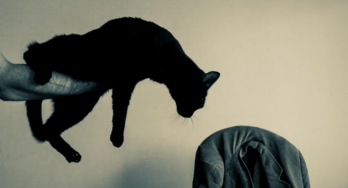 Katzenfoto schwarzer Kater