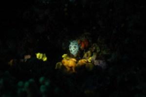la-ciotat-23-24-juin-2012 8845