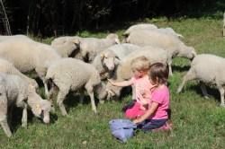 Něco na zub pro ovčí holky
