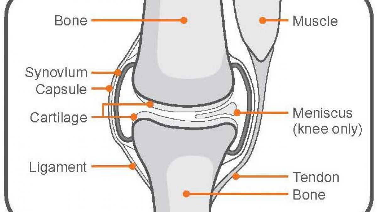 exercise advice knee pain [ 1200 x 675 Pixel ]