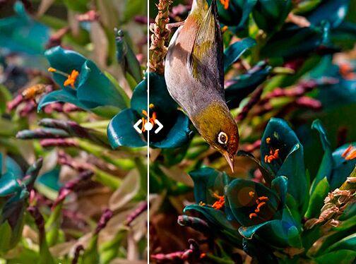 Smooth Image Comparison Slider In Pure JavaScript – ImageComparison