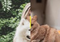 Minimal Mobile-compatible Image Comparison Slider - slider-before-after