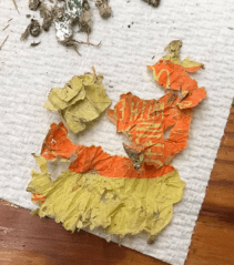 Direct evidence of a coyote's people-food diet: most of a McDonald's wrapper found in a scat sample. (Rachel Larson)