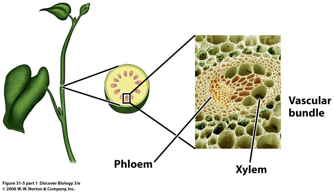 Online Plant Lab Links