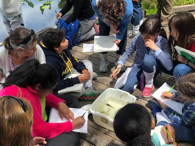 a body of water in upper right corner of image, and about 9 students and adults are also in the image, loosely gathered around a white tub with water in which a large tadpole is visible. Most are holding notebooks and pencils and some are drawing.
