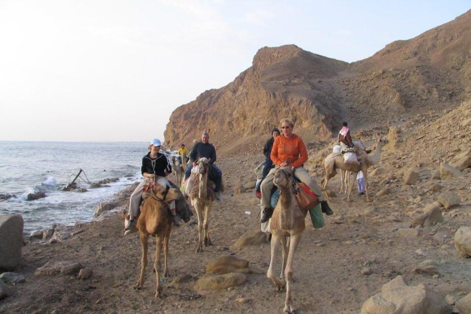 kamelensafari door Sinaï