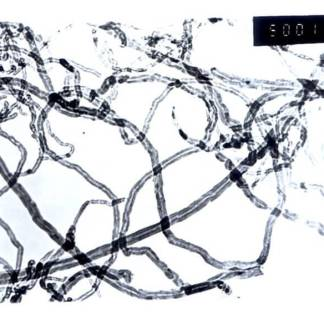 industrial grade multi walled carbon nanotubes 20-40nm