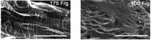carbon nanotube-graphene composites