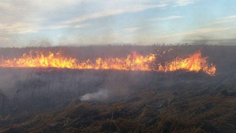 Incendiu în zona Sinoe - Grindul Lupilor. FOTO ISU Dobrogea