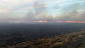 Incendiu în zona Grindul Lupilor