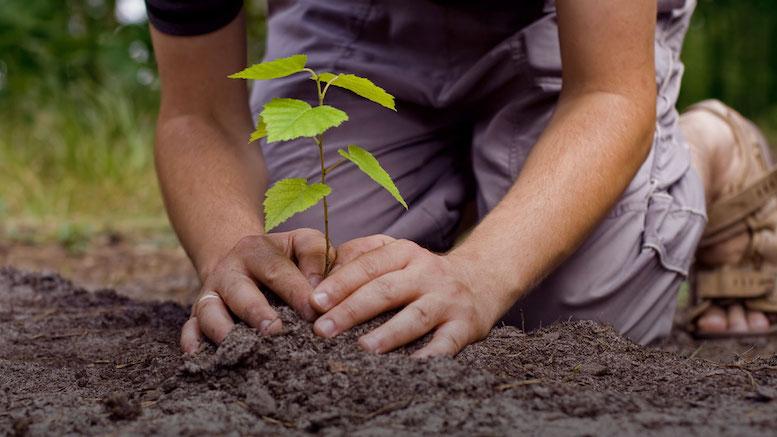 Plantare copaci. FOTO plantabillion.org